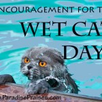 Wet Cat Day www.ParadisePraises.com