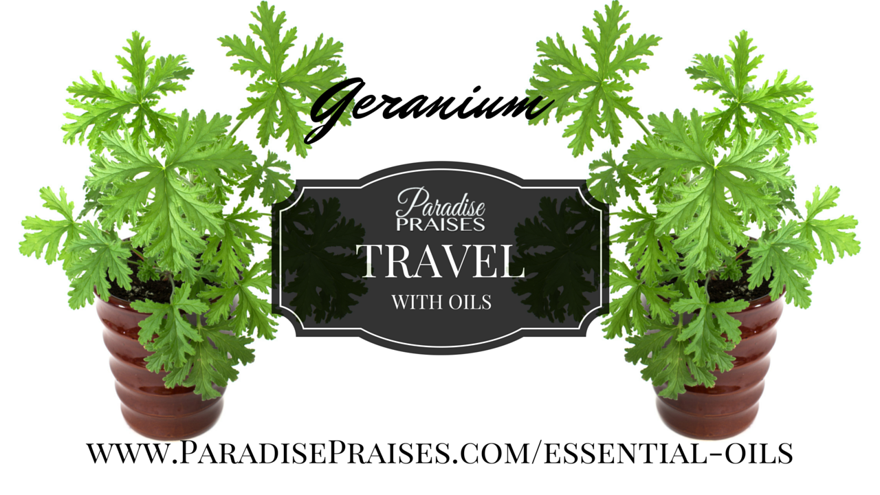 Geranium oil: video on travel with essential oils