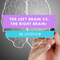 Left Brain: Right Brain