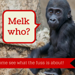 Melk, the Christmas Monkey - teaching God's character to children at Advent www.MelkTheChristmasMonkey.com