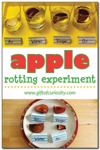 Apple-rotting-experiment-Gift-of-Curiosity