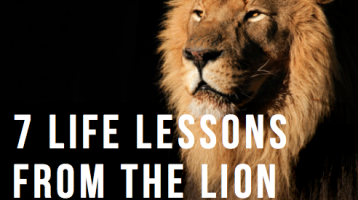 7 Life Lessons from the Lion of Narnia